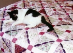 Denise Santa Clara Quilt and Cat